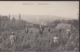 CPA:Genay:Vue Générale:Vignes Avec Animation - Otros Municipios