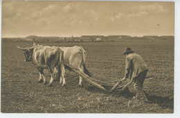 AGRICULTURE - Scène De Labour (attelage Boeufs ) - Attelages