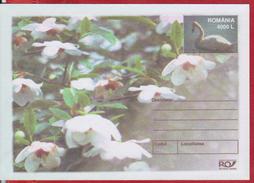 FLOWERS SWAN  BIRDS  ROMANIA POSTAL STATIONERY - Pflanzen Und Botanik