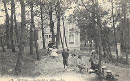Cayeux-sur-Mer (Somme) - Enfants Dans Les Bois De Sapins - Carte LL N° 414 Non Circulée - Cayeux Sur Mer
