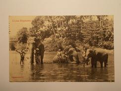 Carte Postale -  SRI LANKA - Ceylon Elephants 1913 (1382) - Sri Lanka (Ceylon)