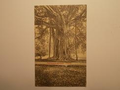 Carte Postale -  SRI LANKA - Peredeniya Gardens Ceylon 1913 (1383) - Sri Lanka (Ceylon)