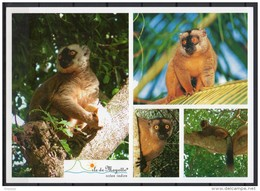 Mayote - Carte Postale - Les Makis - CP Grand Format - Mayotte