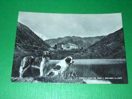 Cartolina Ospizio E Colle Del Gran S. Bernardo - Veduta 1951 - Italy