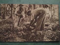 HUSKING COCO-NUTS - Trinidad