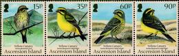 Ascension - 2010 - Yellow Canary - Mint Stamp Set (se-tenant Strip) - Ascension (Ile De L')