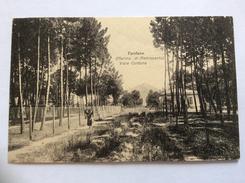 MARINA DI PIETRASANTA - Tonfano - Viale Cortona, Animata - Cartolina FP V 1927 - Italia