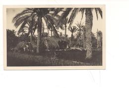 M4482 AFRICA COLONIE CARTOLINA FOTOGRAFICA OASI  NON Viaggiata - Cartoline