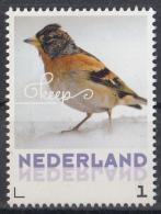 Nederland - 24 Januari 2017 - Wintervogels - Keep- Vogels/birds/vögel/oiseaux - MNH - Zangvogels