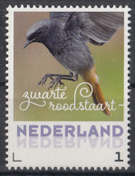 Nederland - 20 Februari 2017 - Lentevogels - Zwarte Roodstaart - Vogels/birds/vögel/oiseaux - MNH - Pájaros Cantores (Passeri)