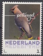 Nederland - September 2017 - Herfstvogels - Pestvogel - Vogels/birds/vögel/oiseaux - MNH - Zangvogels