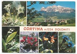1983, (Dolomiti) Cortina -  Fiori Vedutine. - Trento