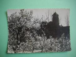 DOURGNE  -  81  -  Abbaye D'En Calcat  -  Le Verger  -  Au Fond, Le Monastère  -  TARN - Dourgne