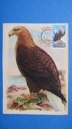 Carte-Maximum  1966  N°   353    Pygargue Queue Blanche - Cartoline Maximum