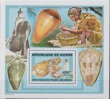 Guinée  Shells Coquillages - Coneshells