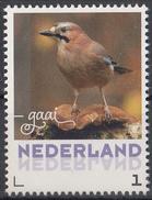 Nederland - September 2017 - Herfstvogels - Gaai- Vogels/birds/vögel/oiseaux - MNH - Niederlande
