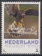 Nederland - September 2017 - Herfstvogels - Blauwe Kiekendief - Vogels/birds/vögel/oiseaux - MNH - Niederlande