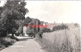 Overberg  Dwarsweg Met Korenveld  1964  Echte Fotokaart - Andere