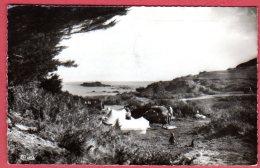 22 SAINT-CAST - Camping De La Mare   (Recto/Verso) - Saint-Cast-le-Guildo