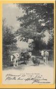 Mucche - Piccolo Formato - Viaggiata - Vacas