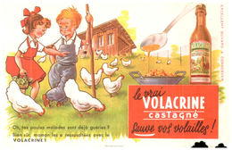 A V C/Buvard    Volacrine Castagné (N= 1) - Animals