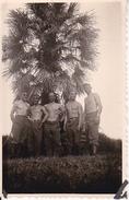 Foto Deutsche Soldaten Unter Palmen - Afrika(?) - Unsere Unterführer - Ca. 1940 - 8*5cm (29241) - War, Military