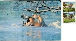 ZAMBIA   Hippo  Nice Stamps - Zambia