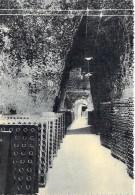 ** Lot De 3 Cartes **  VINICULTURE VIGNES Vin - CHAMPAGNE POMMERY & GRENO Reims : Crayères - Galeries De Vin - CPSM - Vigne