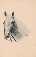 Illustrateur -  Tête Cheval - Raphael Tuck Animaux - Non écrite - Tuck, Raphael