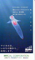 Télécarte  Japon * Poisson (311a) Calamar * Japan Fish Phonecard CALMAR Squid KALMAR Inktvis - Poissons