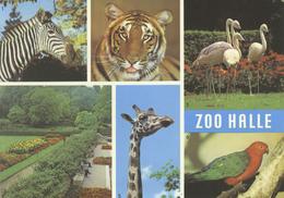 ZOO Halle, Germany - Zebra, Tiger, Flamingo, Giraffe, Parakeet - Halle (Saale)