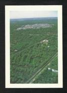 Saudi Arabia Picture Postcard Aerial View Palm Farms Kingdom Saudi Arabia View Card - Arabie Saoudite