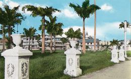 CAYENNE Une Vue De La Place Des Palmistes - Cayenne