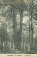 AVERBODE - Het Huwelyk  - Le Mariage - België