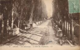 13 - Arles - Les Aliscamps - L' Allée Des Tombeaux - Arles
