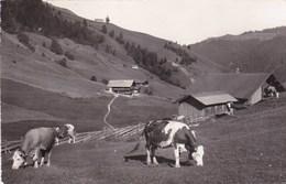 MORGINS/VACHES AU PATURAGE/ SUISSE  (dil157) - Suisse