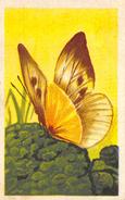 Lot 27 Chromos Aiglon Papillons - Aiglon