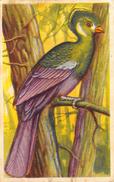 Lot 7 Chromos Aiglon Oiseaux - Aiglon