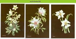 MR998b FLORA BLOEMEN SERING AKKERWINDE JANNEKE BRINKMAN-SALENTIJN FLOWERS BLUMEN FLEURS FLORES NEDERLAND 2017 POSTCARD - Bloemen