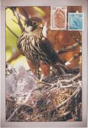 India  2005  Eagle    Bird Of Prey Commemorative Postmark Card # 50136 - Eagles & Birds Of Prey