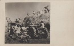 "Croatie - Bjelovar - Agriculture Moissons Battage Foin Tracteur - Coopérative ""Nikole Domagoja"" - 1952 Carte Photo - Croatie"
