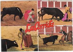 La Corrida : TOROS & CORDILLA - (1. - Serie Toros) - Corrida