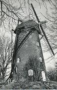 Oelegem - Stenen Molen Uit 1845 - Ranst