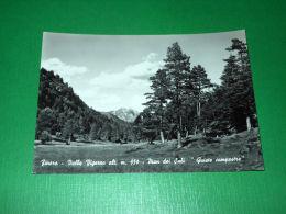 """Cartolina Finero - Valle Vigezzo - Pian Dei Sali """"Quiete Campestre"""" 1960 Ca - Verbania"""