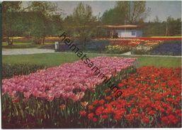 Erfurt - Internationale Gartenbauausstellung - Tulpenfelder - Erfurt