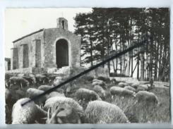 CPM - Provence Pittoresque  - Environs De Pertuis (Vaucluse) -Paysage Provençal En Vallée D'Aigues -(moutons) - France
