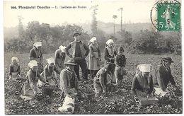 PLOUGASTEL DAOULAS - La Cueillette Des Fraises - Plougastel-Daoulas