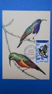 Carte Maximum, Congo, Brazaville ,   Année 1967,  N° PA 50 Oiseaux - Congo - Brazzaville