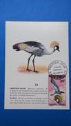 Carte Maximum, Congo, Brazaville ,   Année 1967,  N° PA 51 Oiseaux - Kongo - Brazzaville