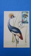 Mauritanie, Carte Maximum, Année 1967 Oiseaux N° PA 64 - Mauritanie (1960-...)